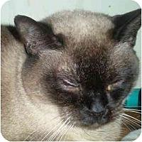 Adopt A Pet :: Slim - Summerville, SC