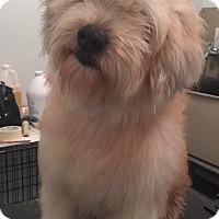 Adopt A Pet :: Newman - Cerritos, CA