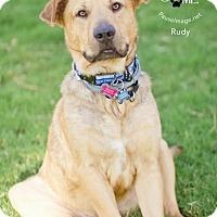 Adopt A Pet :: Rudy ( courtesy listing) - Scottsdale, AZ