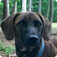 Adopt A Pet :: Rufus - Brattleboro, VT