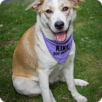 Adopt A Pet :: Sam - Rigaud, QC
