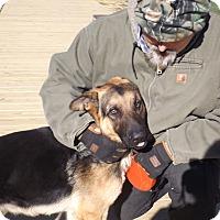 Adopt A Pet :: Trucker - Quincy, IN