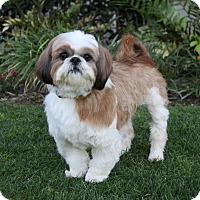 Adopt A Pet :: TRUMAN - Newport Beach, CA