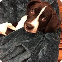Adopt A Pet :: Carson - Woodstock, IL