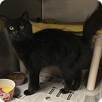 Adopt A Pet :: Sparkles - Newport, NC