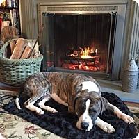 Adopt A Pet :: Bernie - Allentown, PA