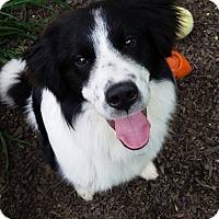 Adopt A Pet :: Laddie - Charleston, SC