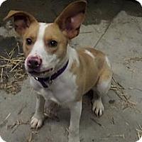 Adopt A Pet :: Radar - Chewelah, WA