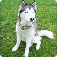 Adopt A Pet :: Cheyanne--Pending! - Belleville, MI