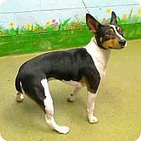 Adopt A Pet :: Cody - Seattle, WA