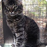 Adopt A Pet :: Moe - Monroe, GA