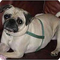 Adopt A Pet :: Angelina - Mays Landing, NJ