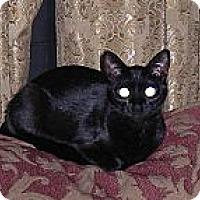 Adopt A Pet :: Georgie - Modesto, CA