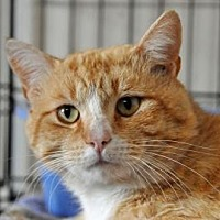 Adopt A Pet :: GOLDENTAIL - Alamogordo, NM