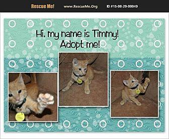 Domestic Shorthair Kitten for adoption in Hurricane, Utah - Timmy