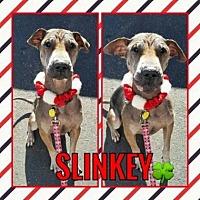 Shar Pei Mix Dog for adoption in Scottsdale, Arizona - Slinkey