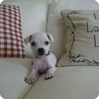 Adopt A Pet :: Harper - Marlton, NJ