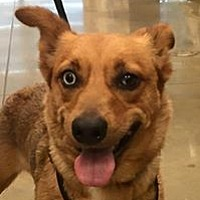 Adopt A Pet :: Alice - Orlando, FL