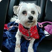 Adopt A Pet :: Harvey - Florence, KY