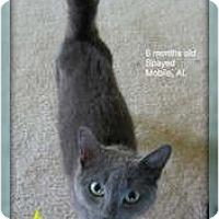 Adopt A Pet :: Polly Anne - Mobile, AL