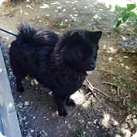 Adopt A Pet :: Terry - Tillsonburg, ON