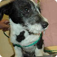 Adopt A Pet :: Cory - Simi Valley, CA