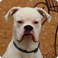 Adopt A Pet :: Jack - O Fallon, IL