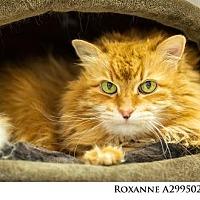 Adopt A Pet :: Roxanne - Reno, NV