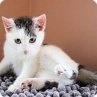 Adopt A Pet :: Angus - Morganton, NC