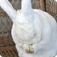 Adopt A Pet :: Brooklyn - Huntsville, AL