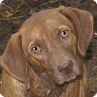 Adopt A Pet :: Romeo - Plainfield, CT