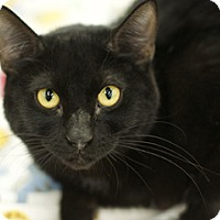 Adopt A Pet :: ChiChi - Great Falls, MT