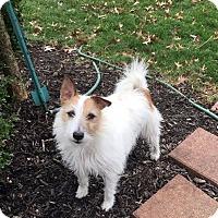 Adopt A Pet :: Benji - Sharon Center, OH