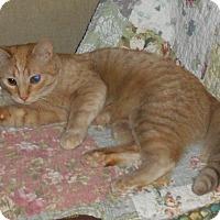 Adopt A Pet :: Ginger - Rochester, MN