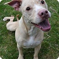 Adopt A Pet :: Lola - Michigan City, IN