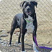Adopt A Pet :: Tank - Gardnerville, NV