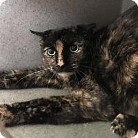 Adopt A Pet :: Betsy - Philadelphia, PA