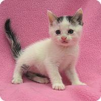 Adopt A Pet :: Alysia - Redwood Falls, MN
