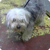 Adopt A Pet :: ATLANTA - Atlanta, GA
