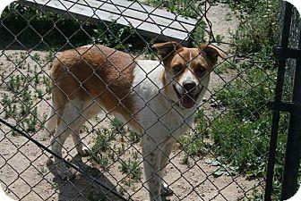 Australian Cattle Dog Mix Dog for adoption in Santa Monica, California - Sweetie