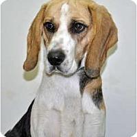 Adopt A Pet :: Sherlock - Port Washington, NY