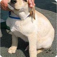 Adopt A Pet :: Due - Cumming, GA