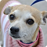 Adopt A Pet :: Tansy - Meridian, ID