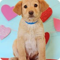 Adopt A Pet :: Elliot - Waldorf, MD
