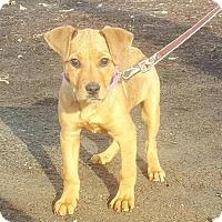 Adopt A Pet :: Harlee - Yreka, CA