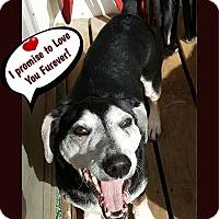 Adopt A Pet :: Shotgun - Warkworth, ON