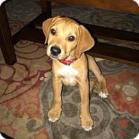 Adopt A Pet :: Moshi - North East, FL