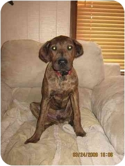 Labradoodle/Shar Pei Mix Dog for adoption in Acme, Pennsylvania - Scrappy & Walter