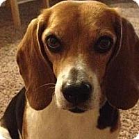 Adopt A Pet :: Lynsie - Phoenix, AZ