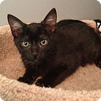 Adopt A Pet :: Smoltz - Monroe, GA
